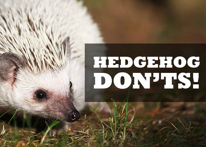 Food Do S And Don Ts For Hedgehogs